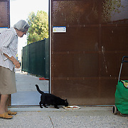 "VENICE, ITALY - AUGUST 27:  Irma a 91 years old venetian ""gattara"" (cat carer) and a Dingo volunteer feeds a stray cat, she has been taking care daily of stray cats since more than 40 years on August 27, 2011 in Venice, Italy. Dingo is the Anglo-Venetian association part of the AISPA,  founded in 1965 by Helen Saunders and Elena Scapabolla and is devoted to the welfare of venetian stray cats. Cats in Venice"
