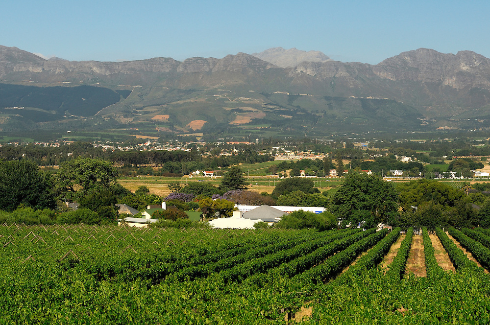 Vineyards near Grande Roche Relais & Chateaux Hotel, Paarl, Western Cape, South Africa