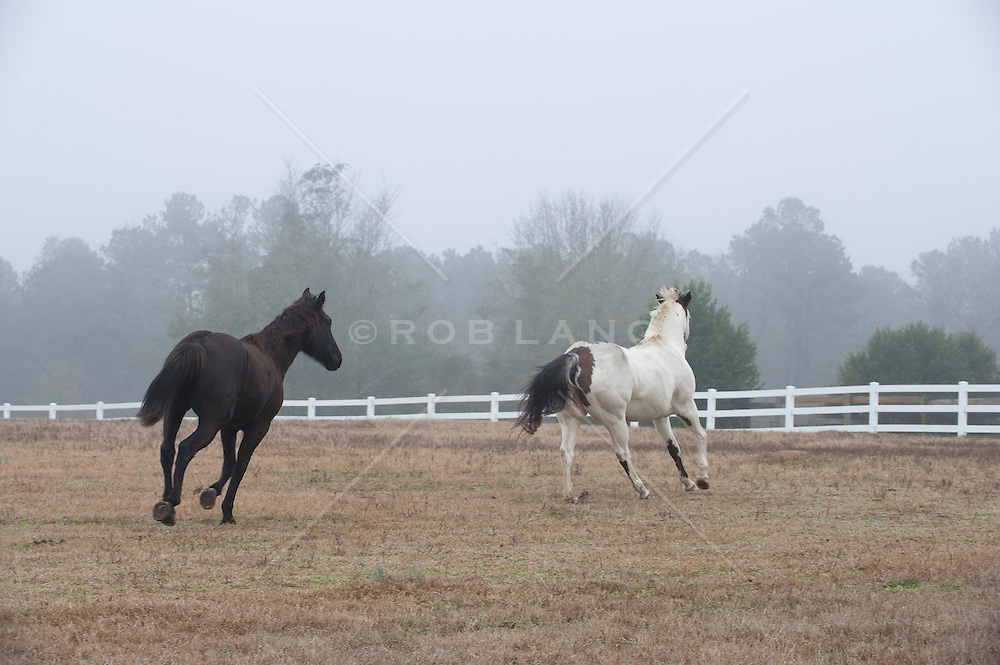 Two horses running in a fenced in pasture