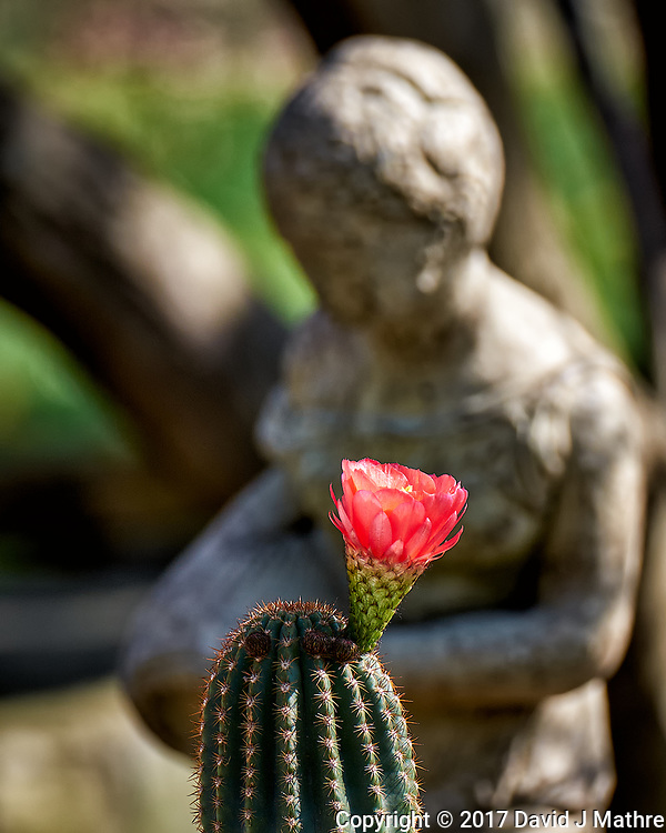 Cactus bloom out in the sunlight. Spring in New Jersey. Image taken with a Fuji X-T1 camera and 100-400 mm OIS lens (ISO 200, 227 mm, f/5, 1/500 sec).