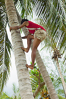 Man climbing a coconut tree in Thailand&#xA;<br />