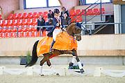 Daphne van Peperstraten - Greenpoint's Cupido<br /> KNHS Indoorkampioenschappen 2017<br /> © DigiShots