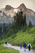 Hikers in Paradise Meadows looking at the Tatoosh Range, Mount Rainier Nationap Park, WA, USA