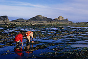Image of beachcombing at Seal Rock State Wayside, Oregon, Pacific Northwest, model released