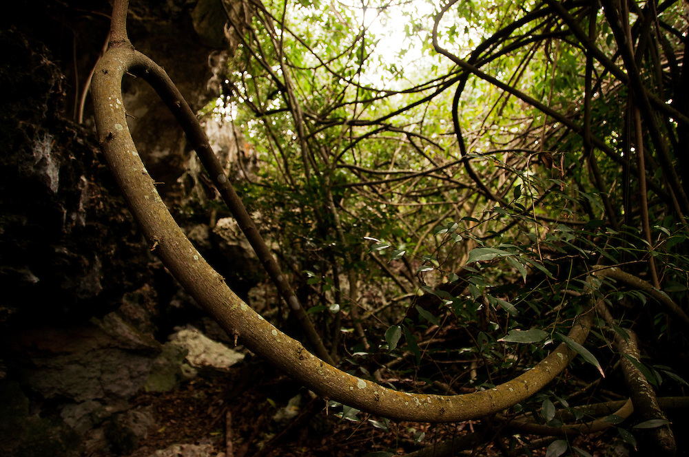 Thick bush jungle on Eleuthera Bahamas