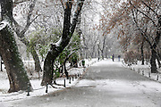 Park During Heavy Snowfall In Winter In Bucharest, Romania