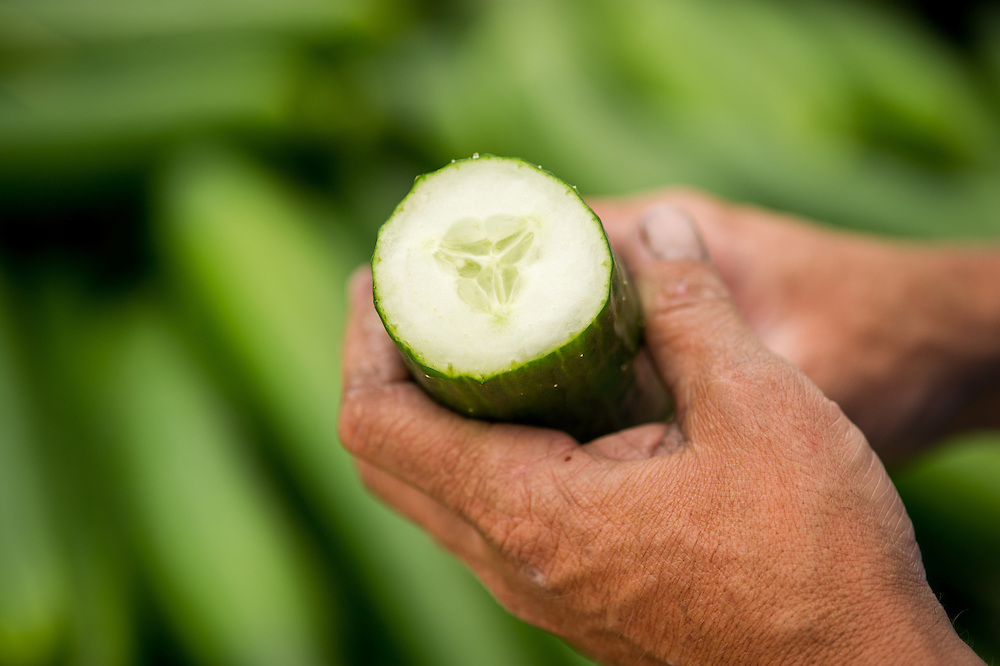 Close up of man's hands holding a cut open cucumber in Cordova, Maryland, USA