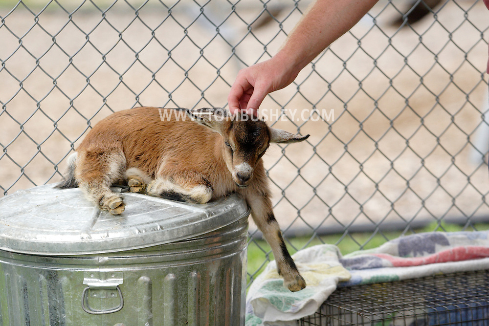 Otisville, NY - A man pets a young goat sitting on top of a garbage can at the Otisville Country Fair on Aug. 26, 2007. The goat was part of a petting zoo exhibit.