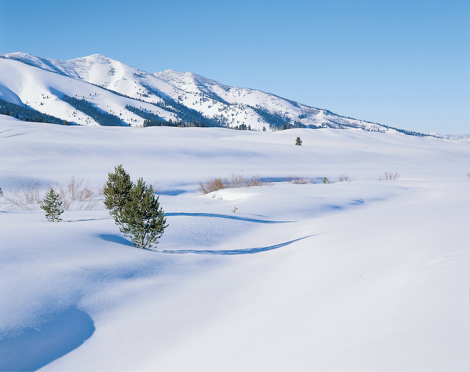 Snowy meadow in the Sawtooth Moutians, Idaho
