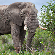 Kruger National Park. South Africa. Organization for Tropical Studies Trip 2009.