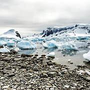 The stony shoreline of Cuverville Island on the western side of the Antarctic Peninsula.