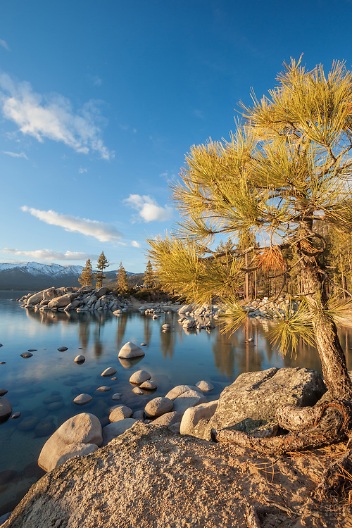 """Tree at Lake Tahoe 4"" - This tree was photographed at Sand Harbor, Lake Tahoe just before sunset."