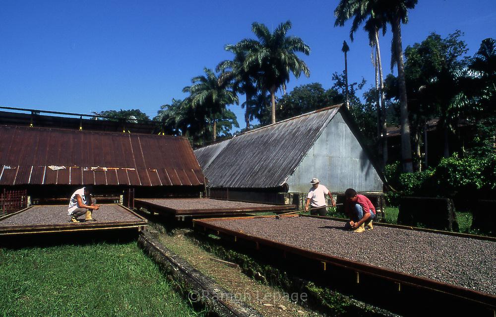 Hacienda productora de Cacao en Venezuela.2001. (Ramón Lepage / Orinoquiaphoto)  Cocoa's Ranch in Venezuela. 2001. (Ramón Lepage / Orinoquiaphoto)
