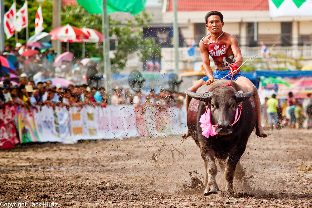 Oct. 3, 2009 - CHONBURI, THAILAND: A jockey gallops his water buffalo down the track during the first day of races at the Chonburi Buffalo Races Festival, Saturday, Oct. 3. Contestants race water buffalo about 200 meters down a muddy straight away. The buffalo races in Chonburi first took place in 1912 for Thai King Rama VI. Now the races have evolved into a festival that marks the end of Buddhist Lent and is held on the first full moon of the 11th lunar month (either October or November). Thousands of people come to Chonburi, about 90 minutes from Bangkok, for the races and carnival midway. Photo by Jack Kurtz / ZUMA Press