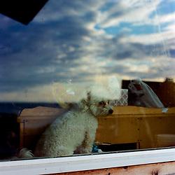Kokhanok, Alaska<br /> Aug. 10, 2017<br /> <br /> A dog known as 'Pebble' or 'Pebbles' in the window of a home in Kokhanok, Alaska, which belongs to Trefon Angasan, Chairman of the Board of Alaska Peninsula Corporation.