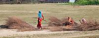 Nepalese women working in a field, Bardiya National Park, Nepal