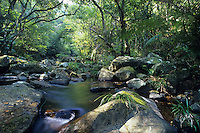 A rainforest stream, Tai Po Kau Nature Reserve, Hong Kong, China.