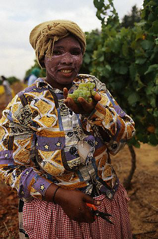 ca. March 1999, South Africa --- Vineyard Worker with Bunch of Grapes --- Image by © Owen Franken/CORBIS