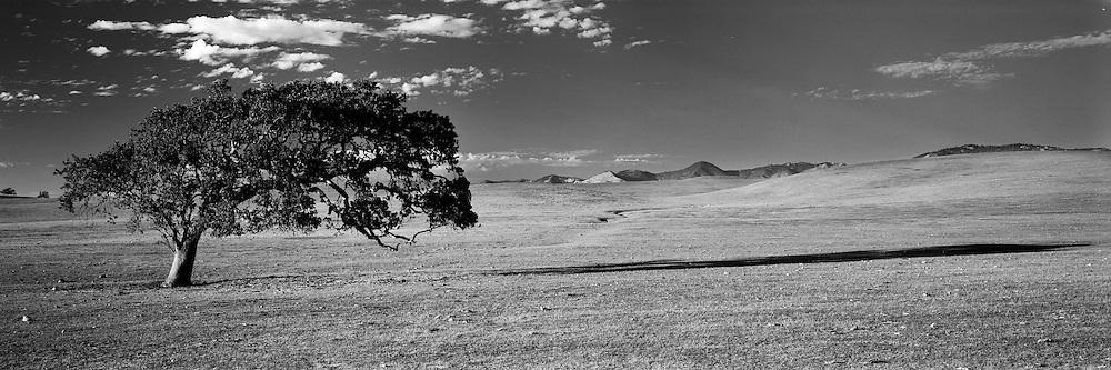Oak tree and hills. Santa Ynez Valley, CA.