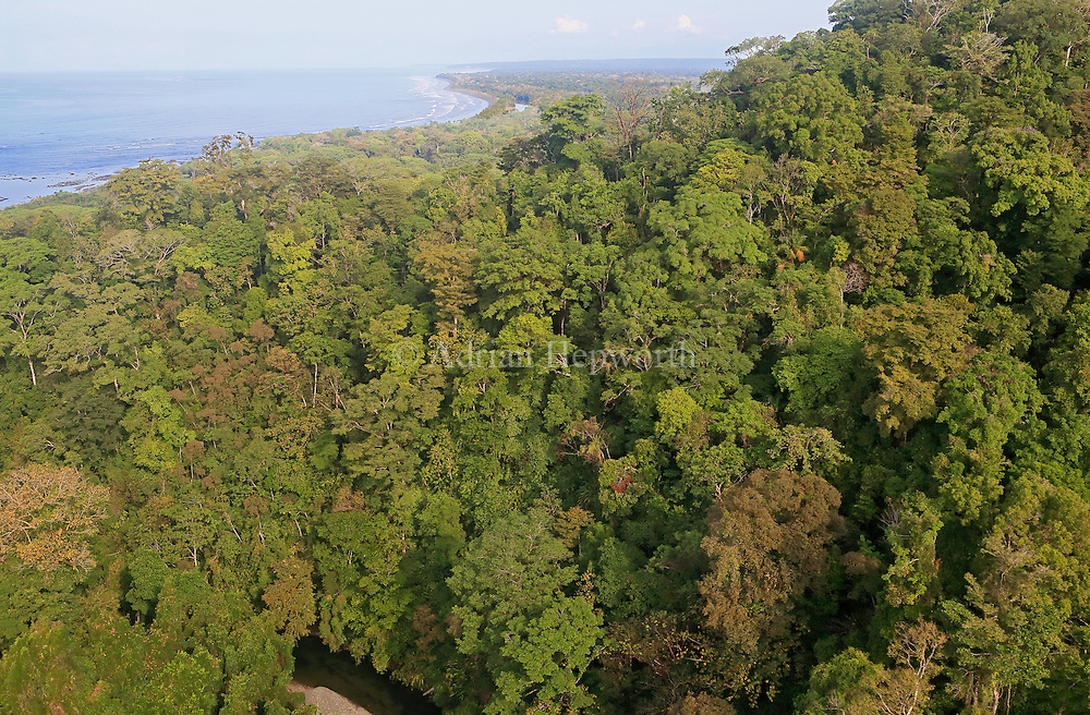 Aerial photo of rainforest and coast near Sirena Ranger Station. River Claro in foreground and River Sirena in Background. Corcovado National Park, Osa Peninsula, Costa Rica. <br />