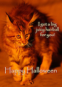 Original Halloween Greeting Cards