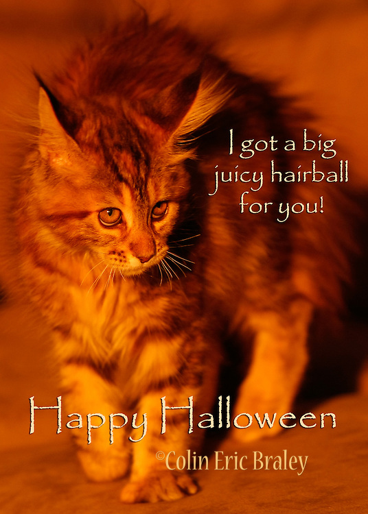 Original Halloween Greeting Cards