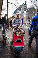Nederland, Amsterdam, 6 dec 2014<br /> Vrouw met kinderwagen om haar vier hondjes te vervoeren.   <br /> Foto: (c) Michiel Wijnbergh