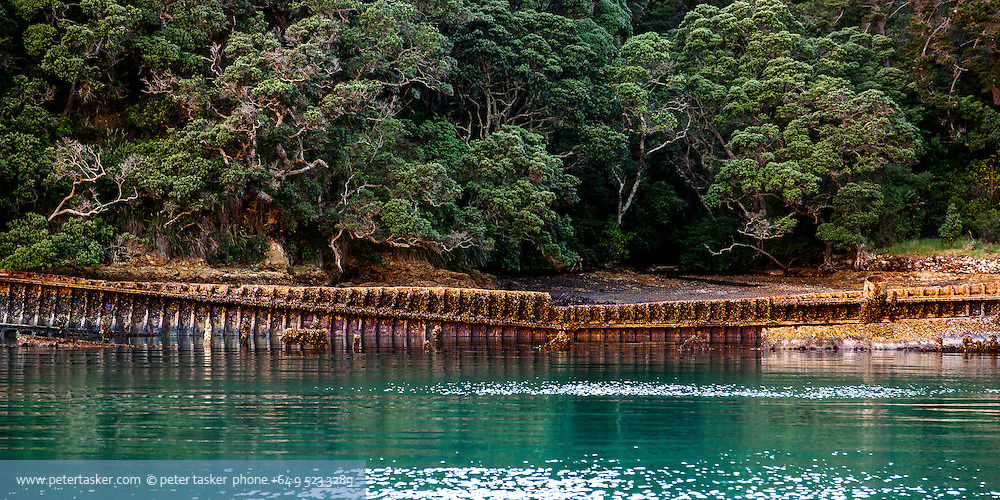 The rusty hull of Charlie Hansons' Rewa lying in Shipwreck Bay, Moturekareka Island, Hauraki Gulf, New Zealand.