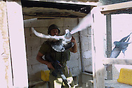 I.D.F discover a tunnel to smuggling weapon to Gaza strip.....A solder freeing pigeon from dovecote before the explosions