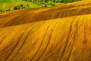 Brown spring field in Dobrudzha