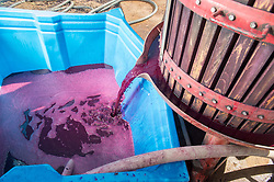 March 6, 2015 - Paarl, Western Cape, South Africa - Paarl, South Africa - Wine makers mashing wine grapes (Credit Image: © Edwin Remsberg/VW Pics via ZUMA Wire)
