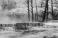Steaming mineral terraces at Mammoth Hot Springs with trees killed by mineral buildup creates a dramatic extreme landscape, Yellowstone National Park, WY, © 2005 David A. Ponton