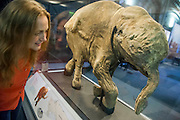 Victoria Herridge, an NHM expert looks at Lyuba. Mammoths: Ice Age Giants at the Natural History Museum (opens 23 May 2014)<br /> It includes huge fossils and life-size models of mammoths and their relatives tower above you and meet Lyuba, the world&rsquo;s most complete mammoth, as she takes centre stage in the exhibition for her first appearance in western Europe. She is the star of the show, a baby woolly mammoth discovered in Russia&rsquo;s Yamal Peninsula of Siberia in May 2007. She died around 42,000 years ago at just one month old. Her body was buried in wet clay and mud which then froze, preserving it until she was found by reindeer herder Yuri Khudi and his sons, as they were searching for wood along the frozen Yuribei River thousands of years later. The exhibition also includes some of the best-known species, from the infamous woolly mammoth and the spiral-tusked Columbian mammoth to their island-dwelling relative the dwarf mammoth. South Kensington, London.