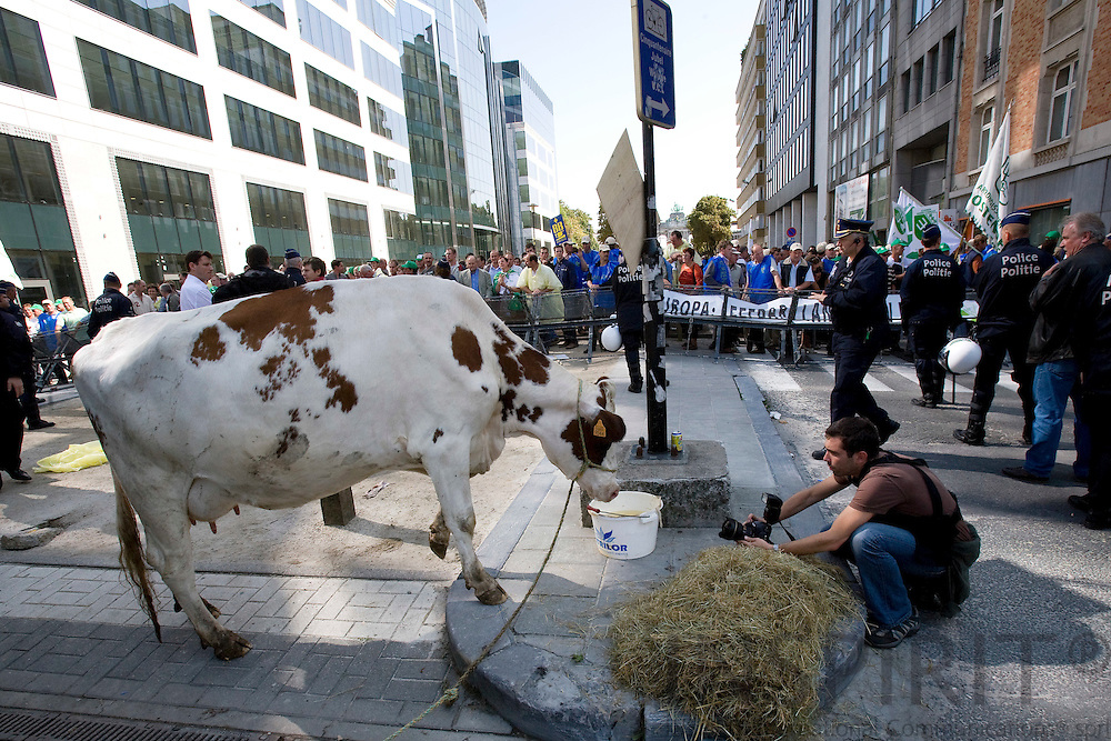 BRUSSELS - BELGIUM - 07 SEPTEMBER 2009 -- Hundreds of Belgian farmers and one cow demonstrated outside the European Council in Brussels for better milk prices, where the EU farm minister held a meeting.  Photo: Erik Luntang