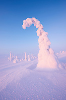 RIISITUNTURI NATIONAL PARK; FINLAND 2009; EUROPE; LANDSCAPE PHOTOGRAPHY; WINTER SCENERY; COLD; FEBRUARY