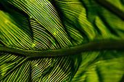 leaf,macro