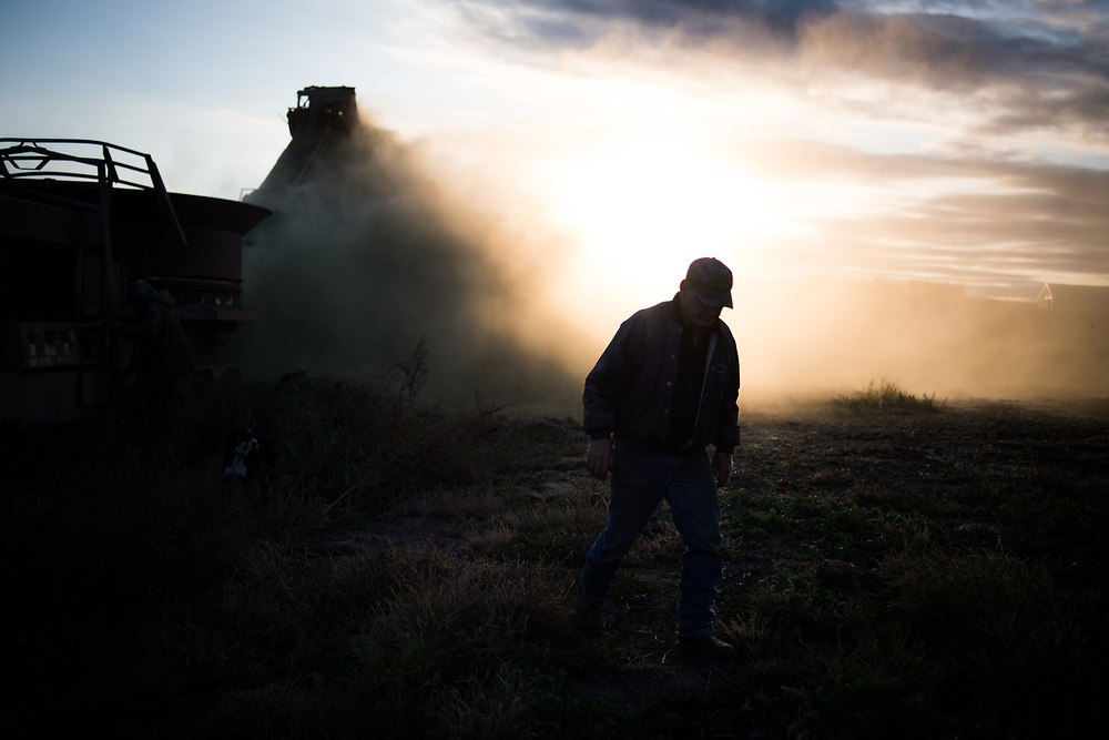 Keith Gaaskjolen walks away from a hay grinder while preparing for winter feeding on his ranch south of Meadow, SD on October 4, 2017. Keith works the ranch with his son Vanden after his other son moved away and became an engineer working on the oil fields of North Dakota.
