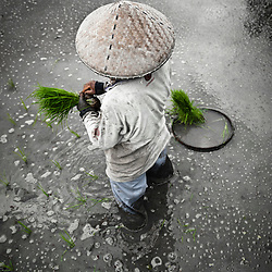 Woman planting rice, Bali, Indonesia