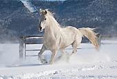 Winter Snow Horses One