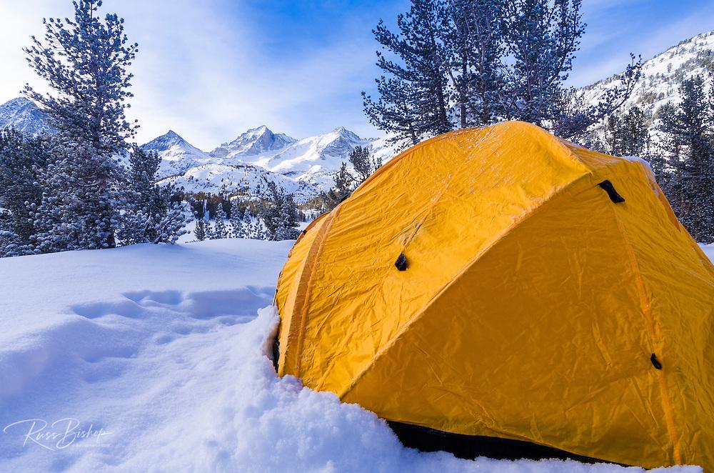 Yellow dome tent in winter, John Muir Wilderness, Sierra Nevada Mountains, California  USA