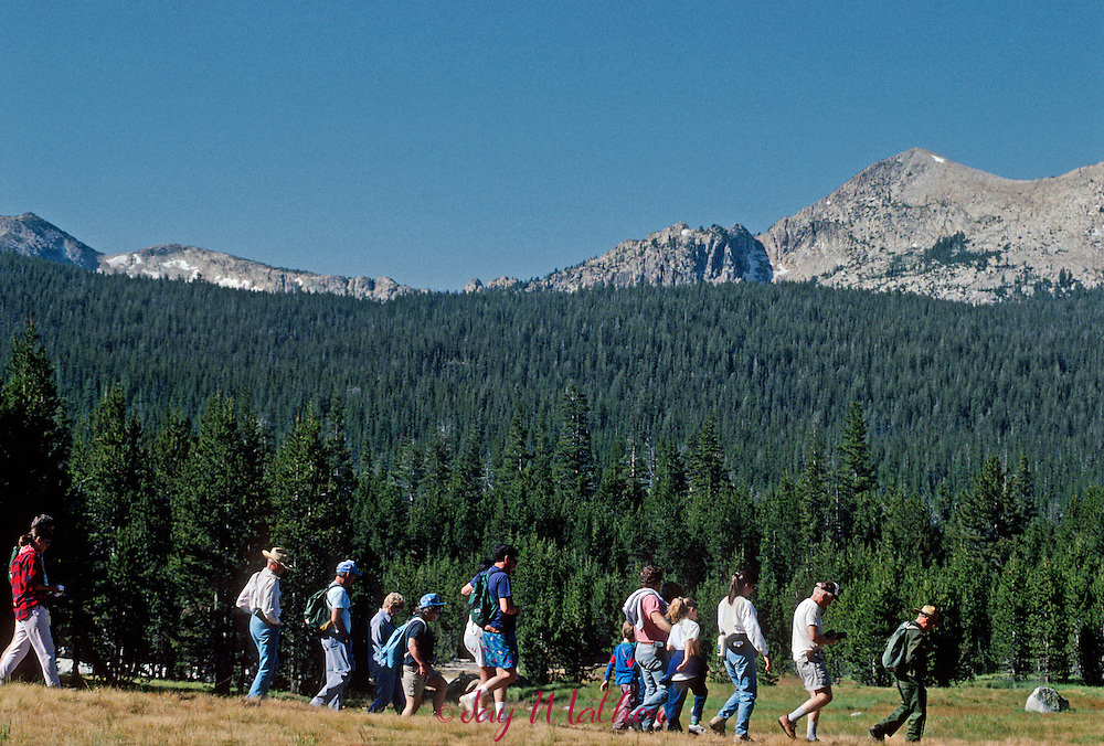 Carl Sharsmith, the elder statesman of rangers in the National Park system and foremost authority on the natural history of the Sierra, was famous for his Tuolumne Meadows environmental walks with visitors eager to hear his stories from 60 years of experience in the park.  He was photographed on two occasions, July and September 1989.  Mr. Sharsmith died October 14, 1994 at the age of 91.