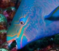 Bonaire, Netherlands Antilles, Caribbean Bonaire, Netherlands Antilles, is am island marine park and popular scuba diving Mecca.