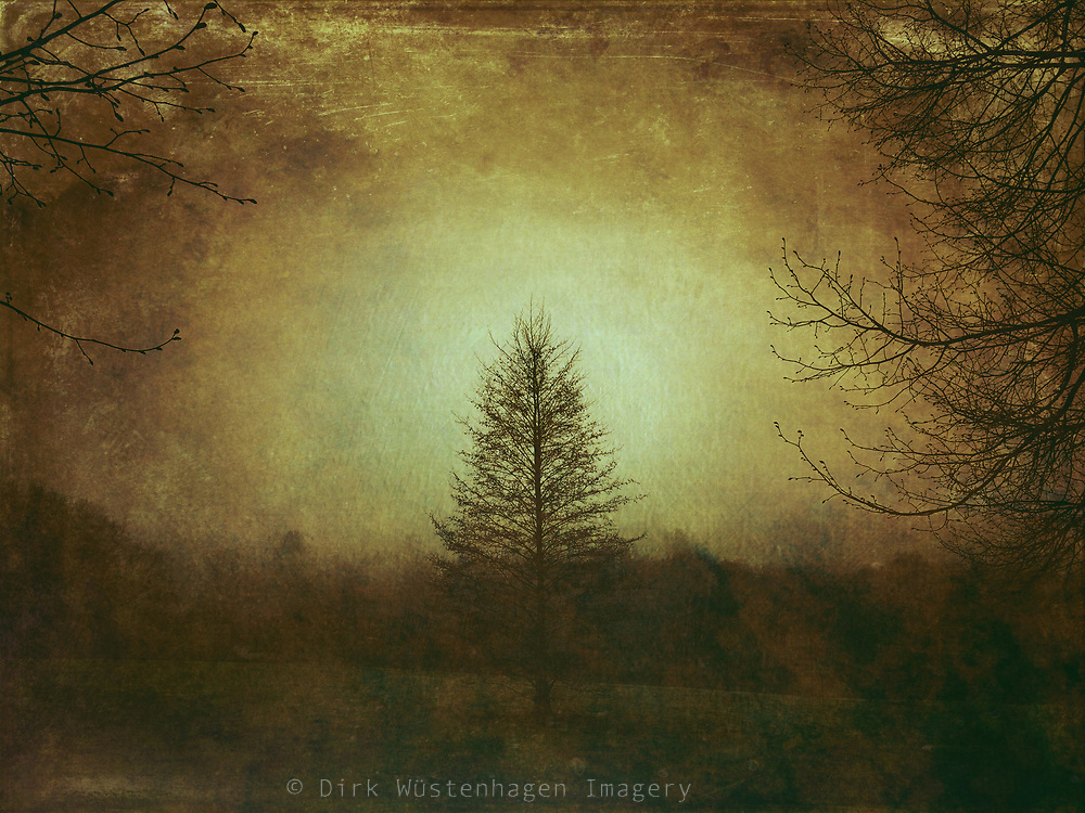 Photoshelter; Winter; Dunkelheit; darkness; landscape; nature; trees; Germany; composition; conceptual; creative photography; dark; fine art; iphoneography; painterly; peaceful; photo illustration; photomanipulation,iphone6s,dark, texture, misty, lone tree, mood, creative photography, meadow, morning, monochrome, moody, winter,