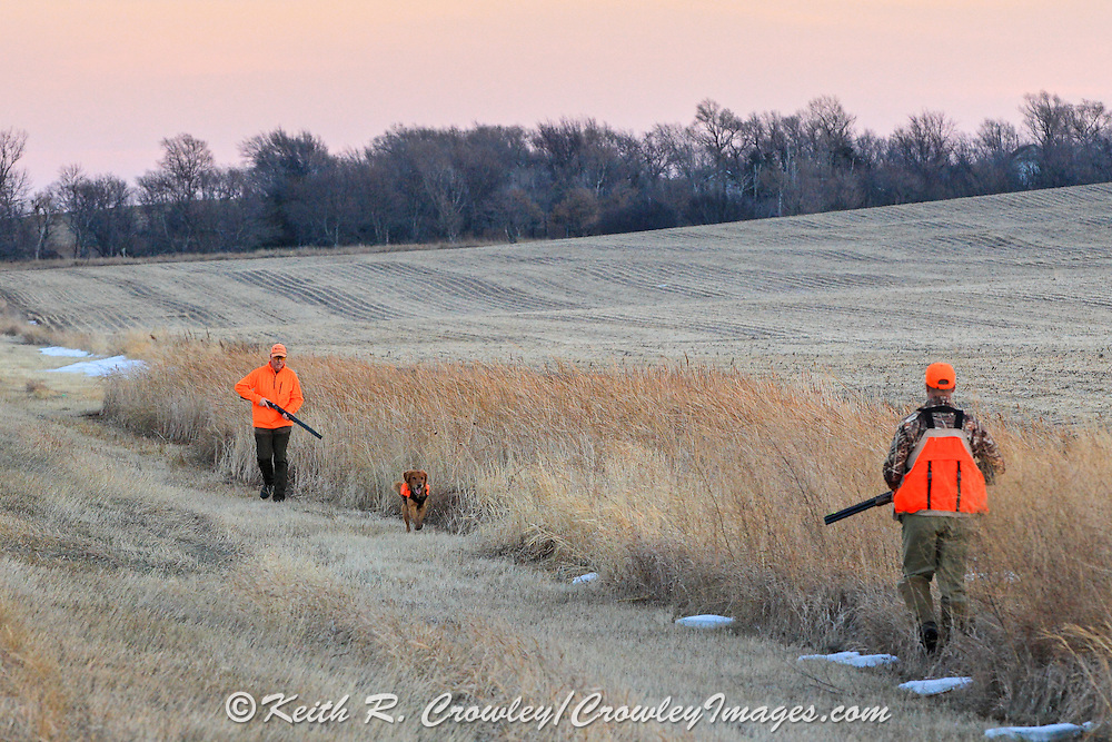 Pheasants Hunters Walk a Ditch in Eastern South Dakota