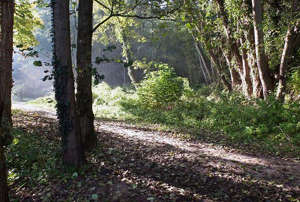 Nederland, Ubbergen, 22-10-2012Het was een dag met mooi herfstweer. Herfstbos. Foto: Flip Franssen/Hollandse Hoogte