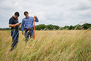 Cattle Forage Grazing estimating