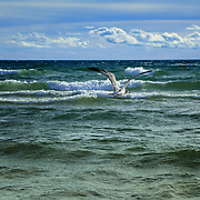 &quot;Watcher on the Wind&quot;<br />