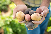Mike Heath was one of the first organic potato farmers in Idaho.