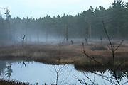 Foggy marsh at dusk