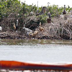 A line of containment boom lies in front of a barrier island in Bay Conquille that is home to a variety of birds off the coast of Louisiana, U.S., on Tuesday, June 15, 2010.  Oil from Deepwater Horizon spill continues to impact areas across the coast of gulf states. (Mandatory Credit: Derick E. Hingle).